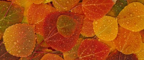 fall-leaves-wallpapers_14804_1920x1200